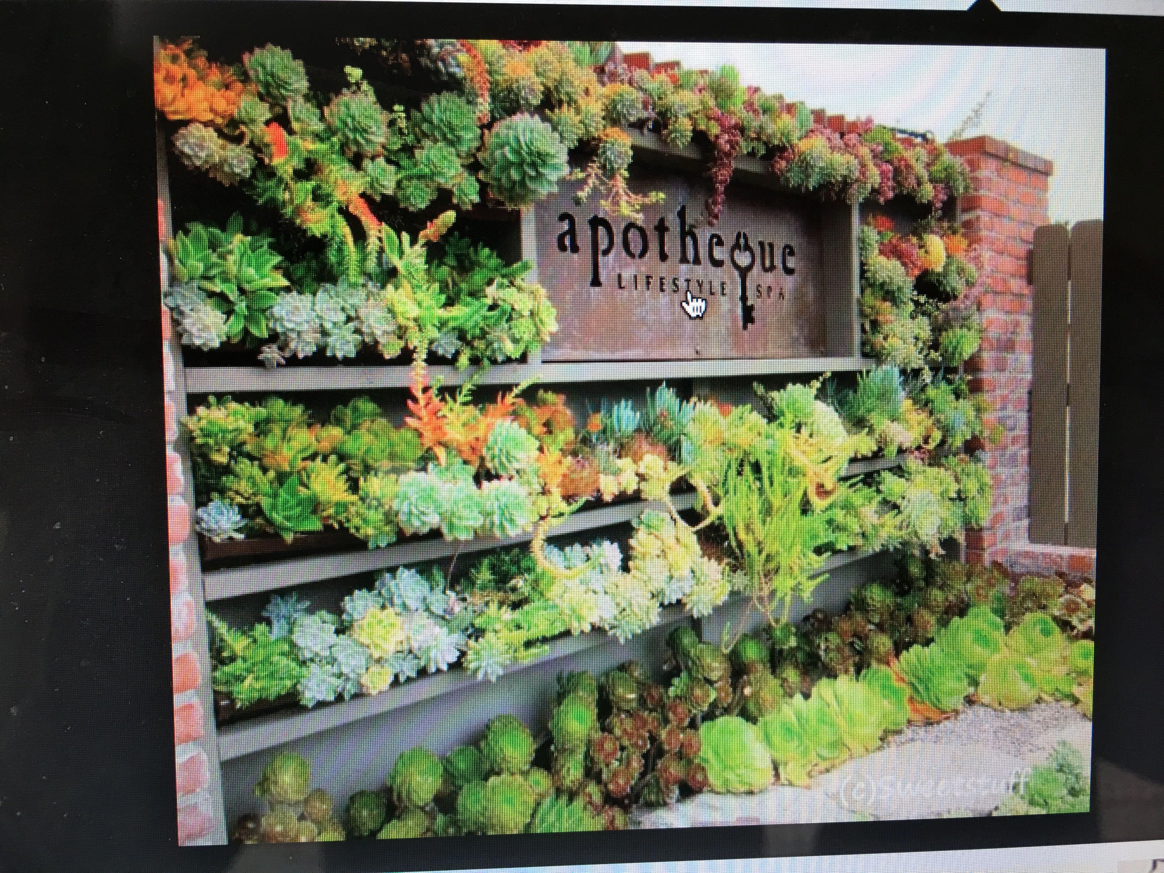 Mur Vegetal Plante Grasse Épinglé par brita wald sur organic wall garden | jardins