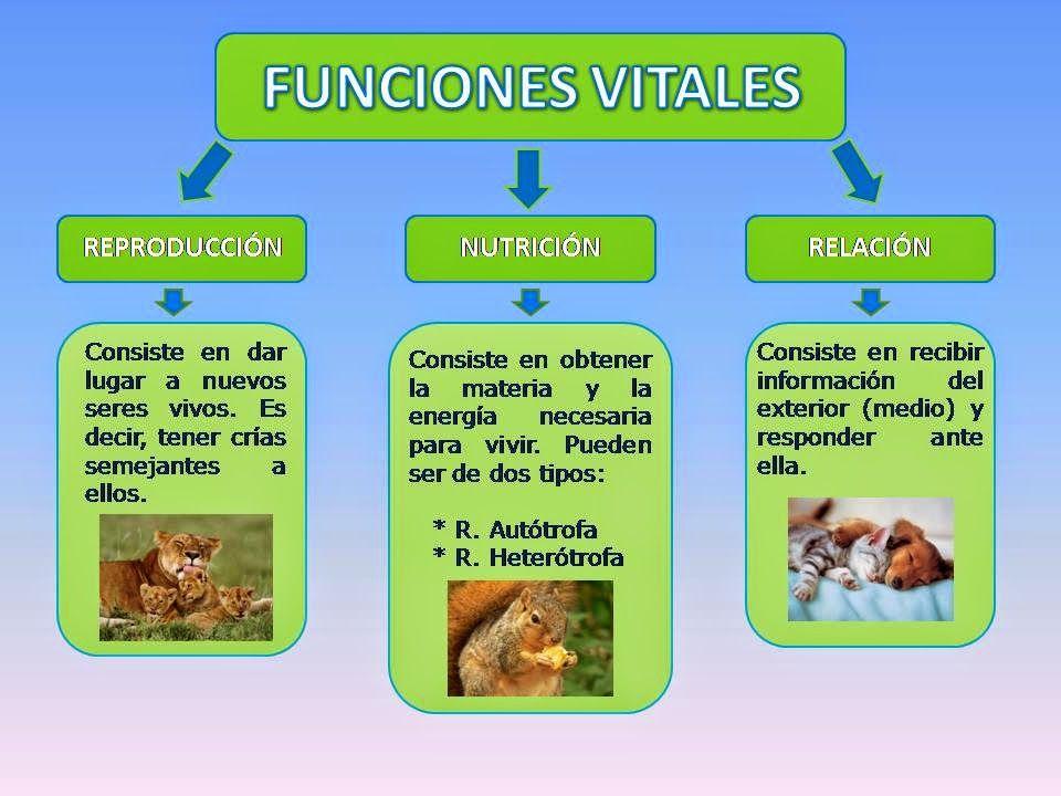 Las Funciones De Los Seres Vivos Funciones De Nutricion Sistema Respiratorio Para Niños Seres Vivos