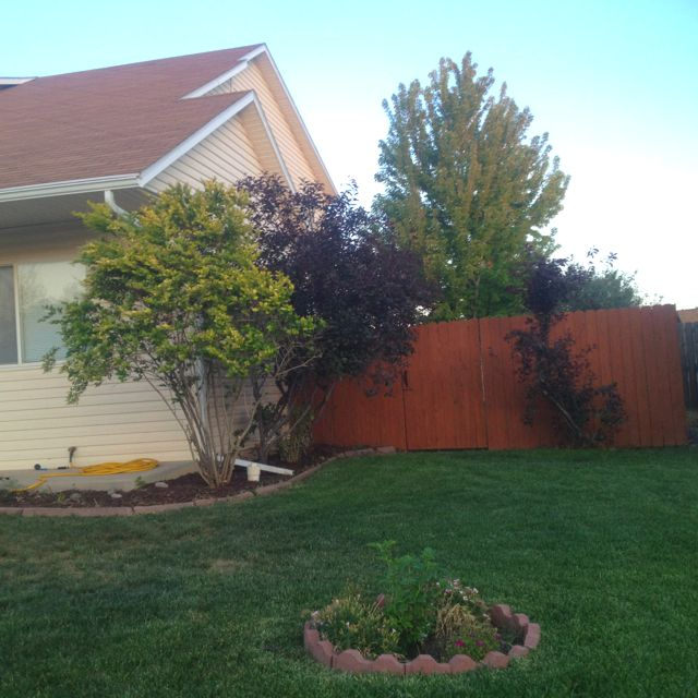 Fence Stain Color-Sherwin-Williams Cedar Bark...love