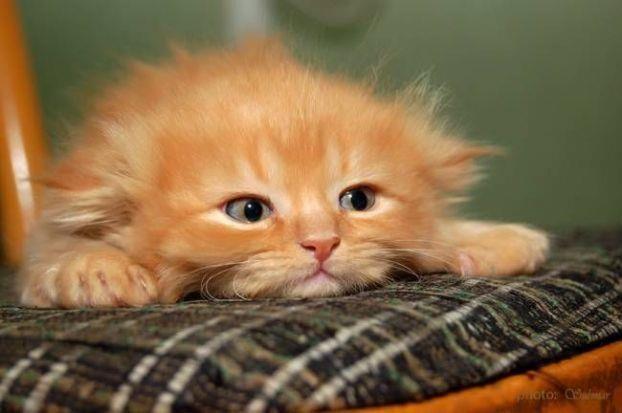 do I look ready to pounce?