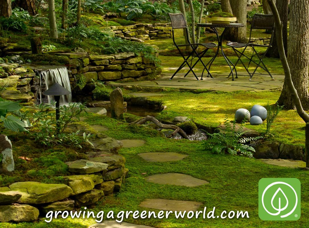 Moss can play many roles in the garden from feature to filler to lawn tv episodes moss for A b lawn and garden