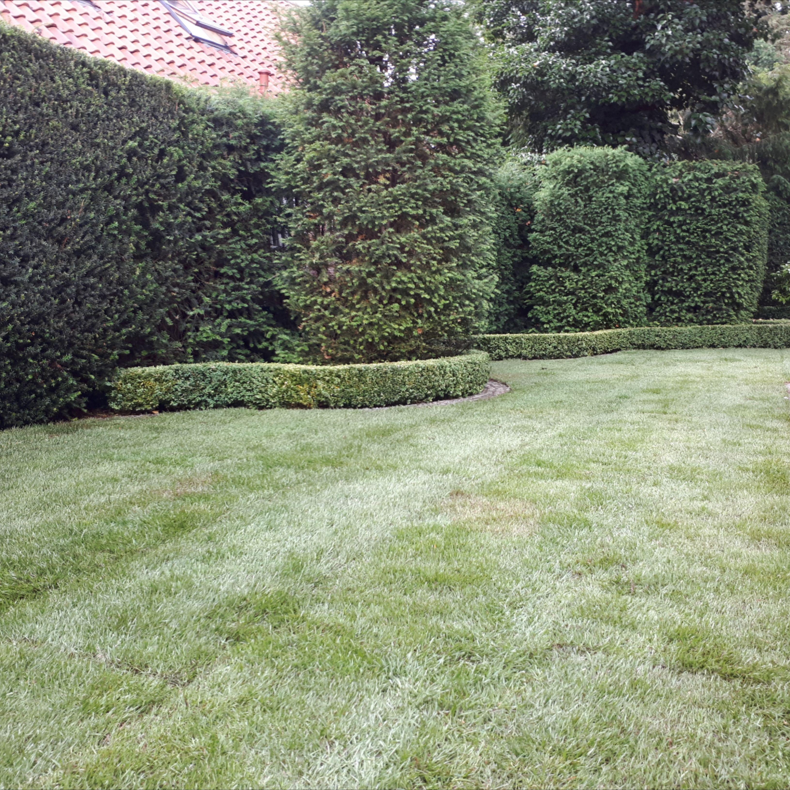 Rollrasen Verlegen In Der Region Hannover Rasen Gartengestaltung Garten