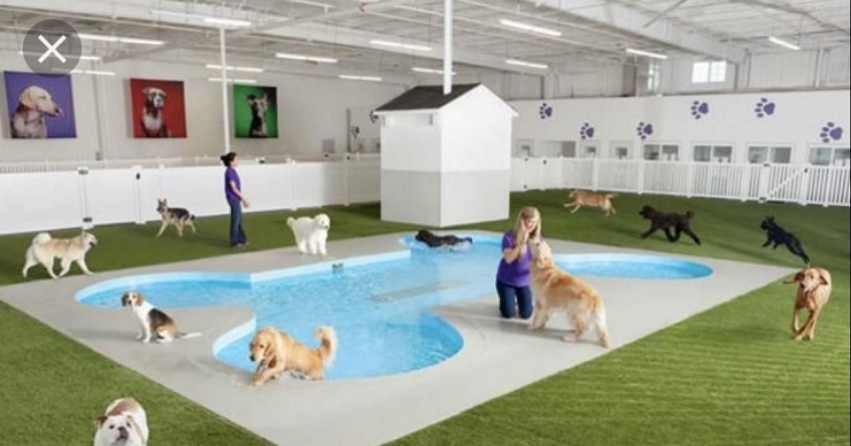 Solicito La Construccion De Un Refugio Para Perros Abandonados En