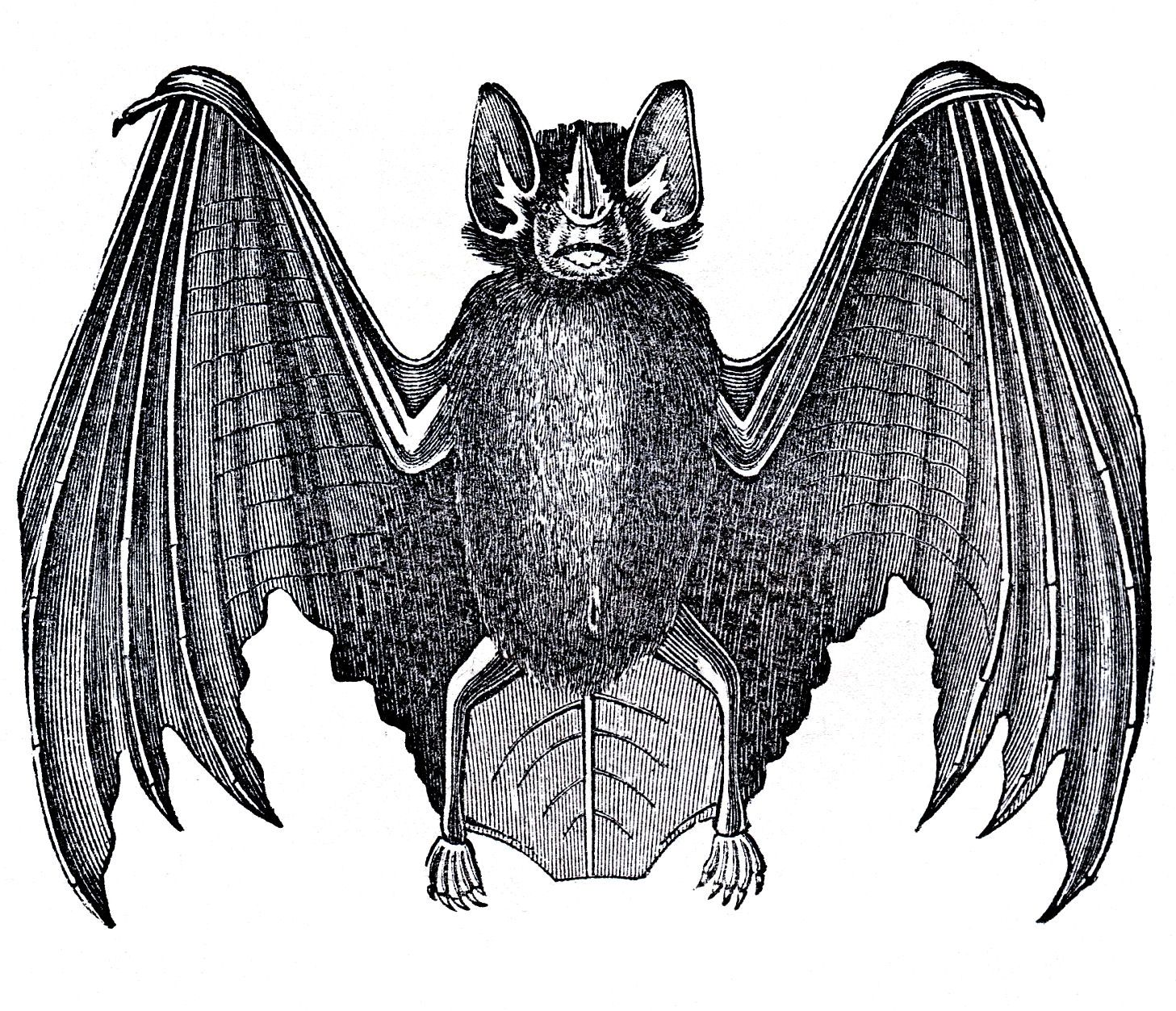 Vintage Halloween Graphics Vintage Halloween Bat Clip Art Halloween Prints Halloween Graphics Halloween Clipart