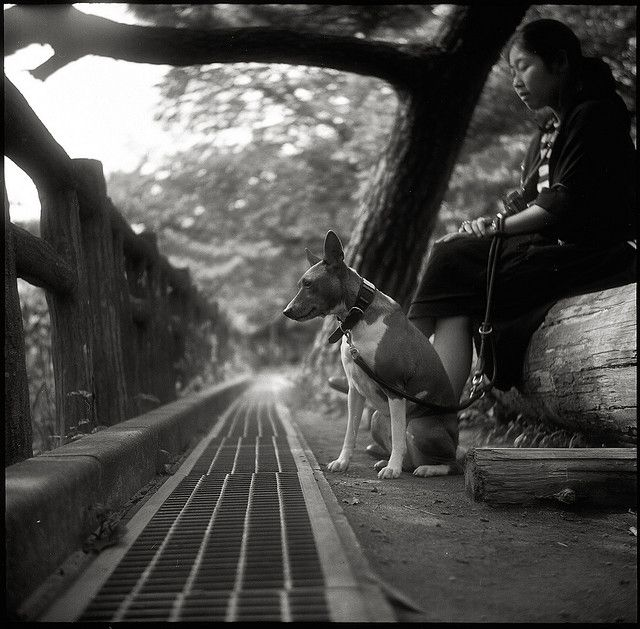 Basenji. By Tommy Oshima.