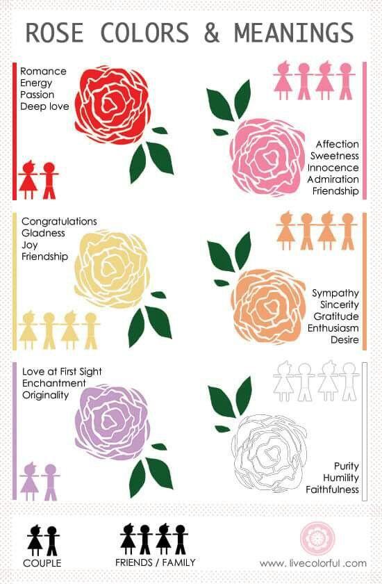 Rose Color Meanings Rose Color Meanings Color Meanings Rose