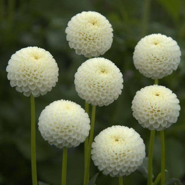 10 Tumblr Planter Des Fleurs Fleurs Blanches Decoration Jardin