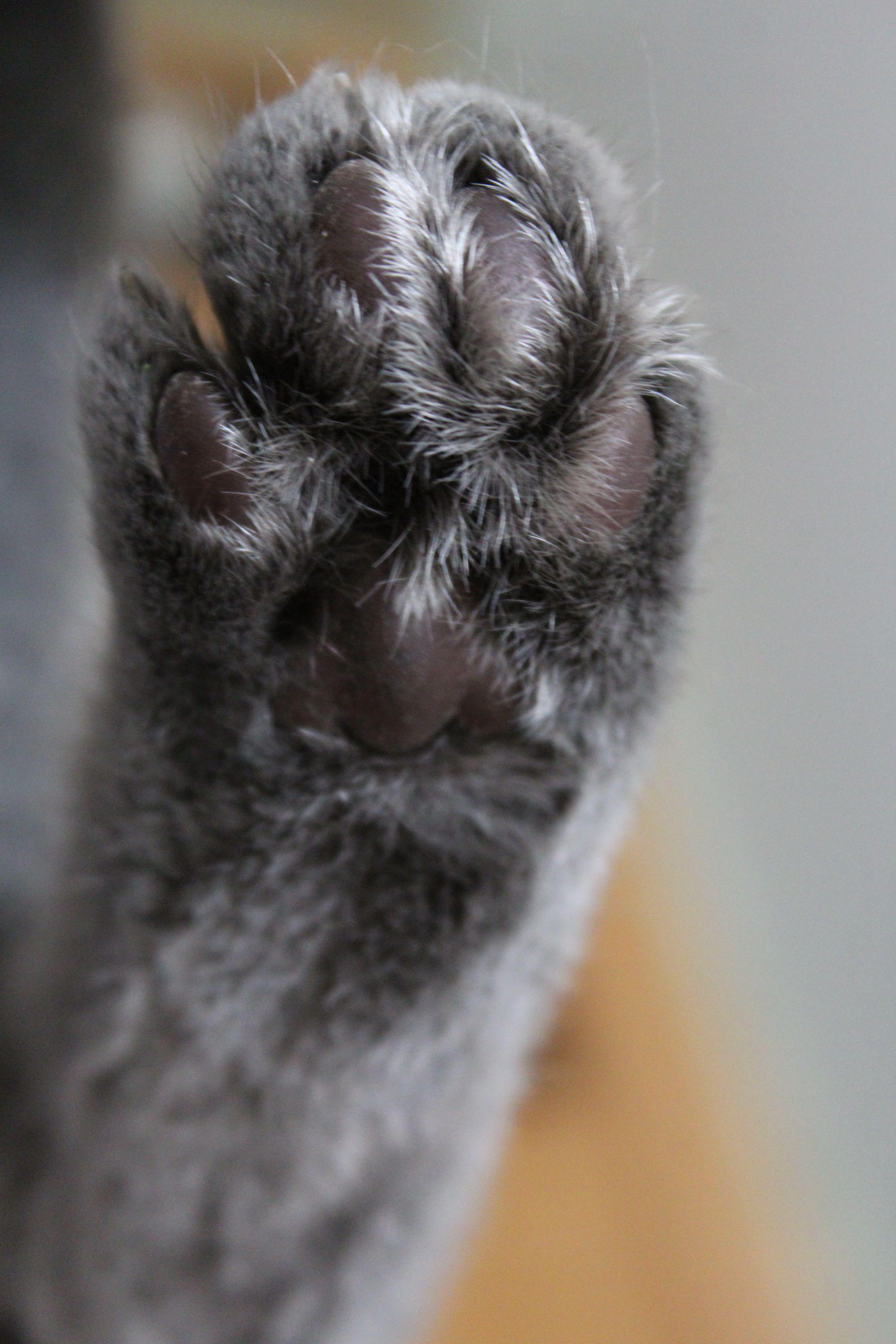 KatzenpfotenBild von Ela Myzan auf Kocie lapki Katzen