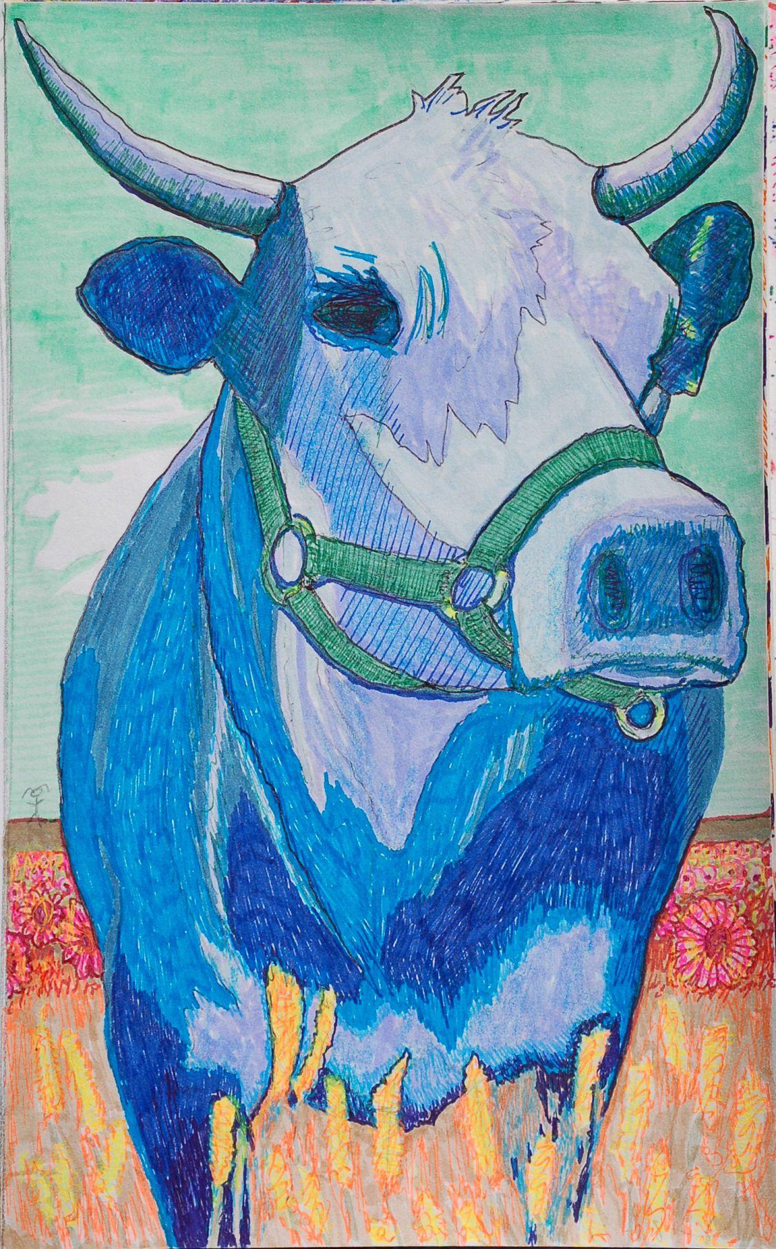 Blue Cow - (bb251)