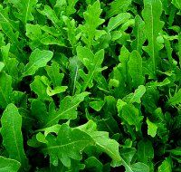 Семена салат эрука спартак седек