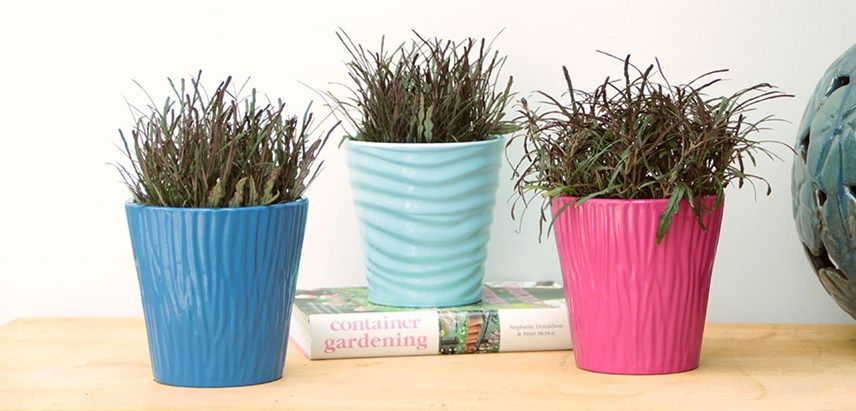 Pin On Indoor Plant Possibilities