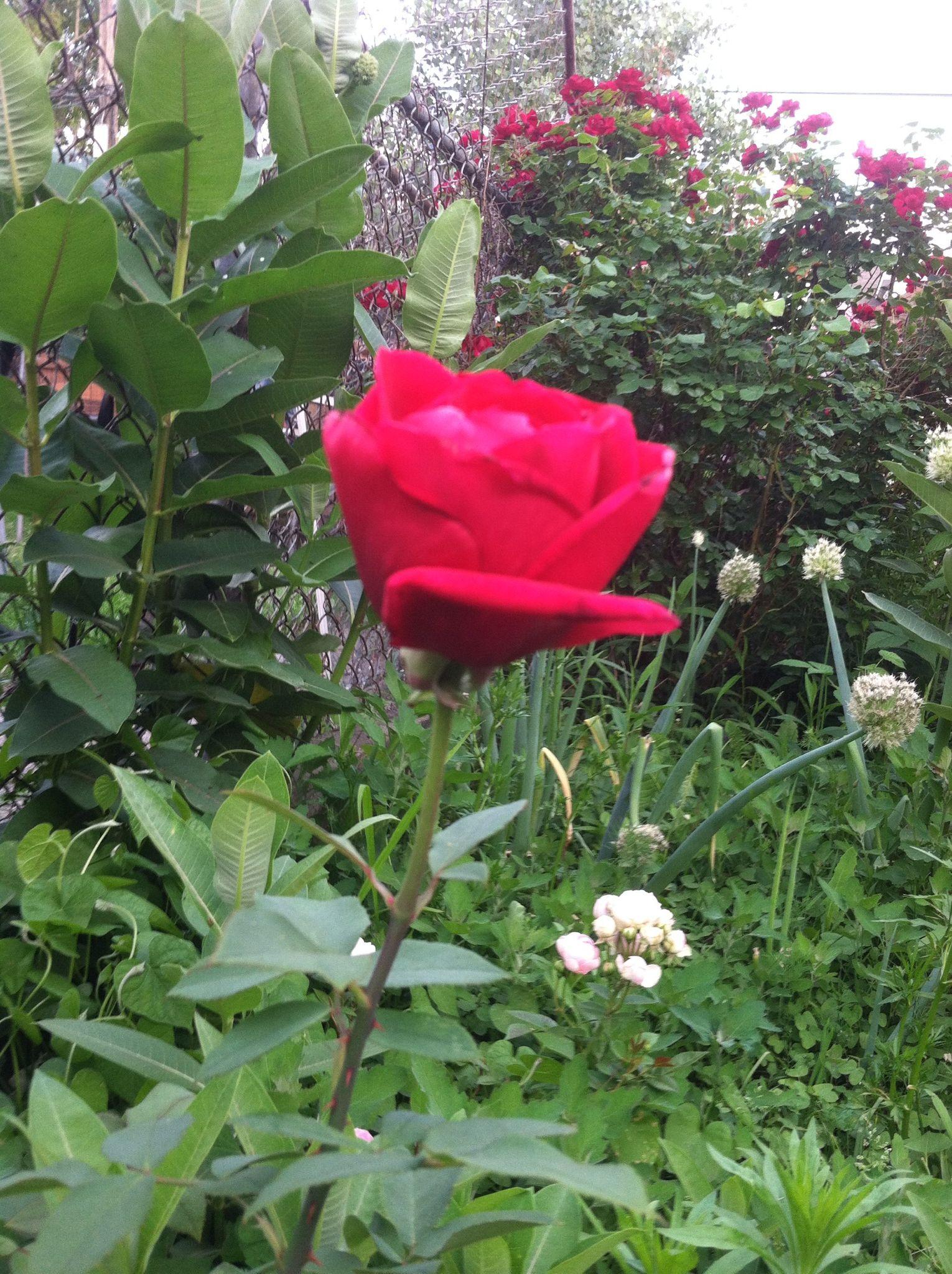 Pin By واحد1من الناس On Nature Bloom Plants Flowers