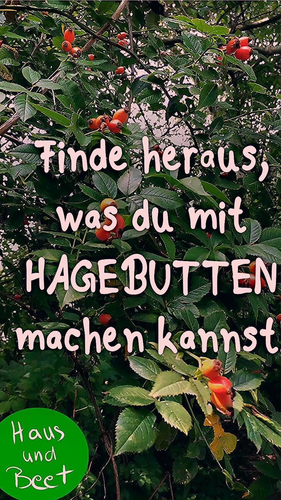 Photo of Hagebutte – Die Vitaminbombe der Rosen