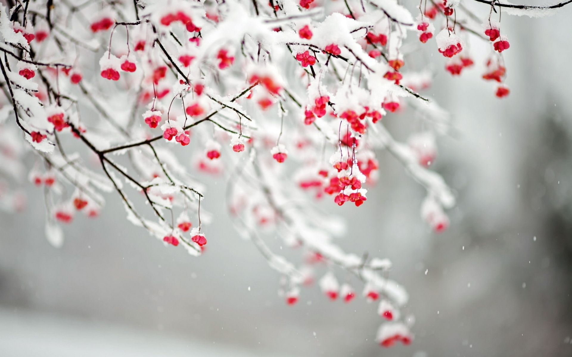 Image result for winter flower