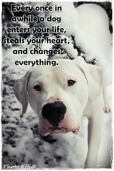 Pin By Eden Sloskey On Dogo Argentino Dogs Dogo Argentino Close To My Heart