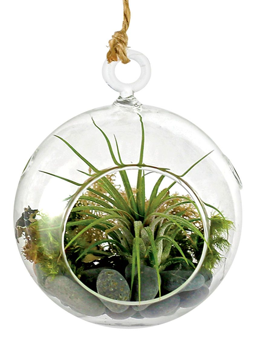 Create Your Own Living Art With Our Hanging Air Plant Terrarium Kit