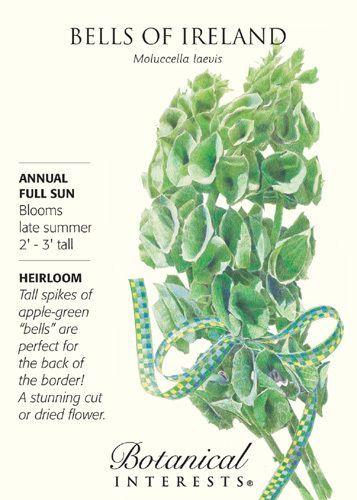 Bells Of Ireland Seed 500 Mg Annual Irish Flower Unusual Plants Irish Garden