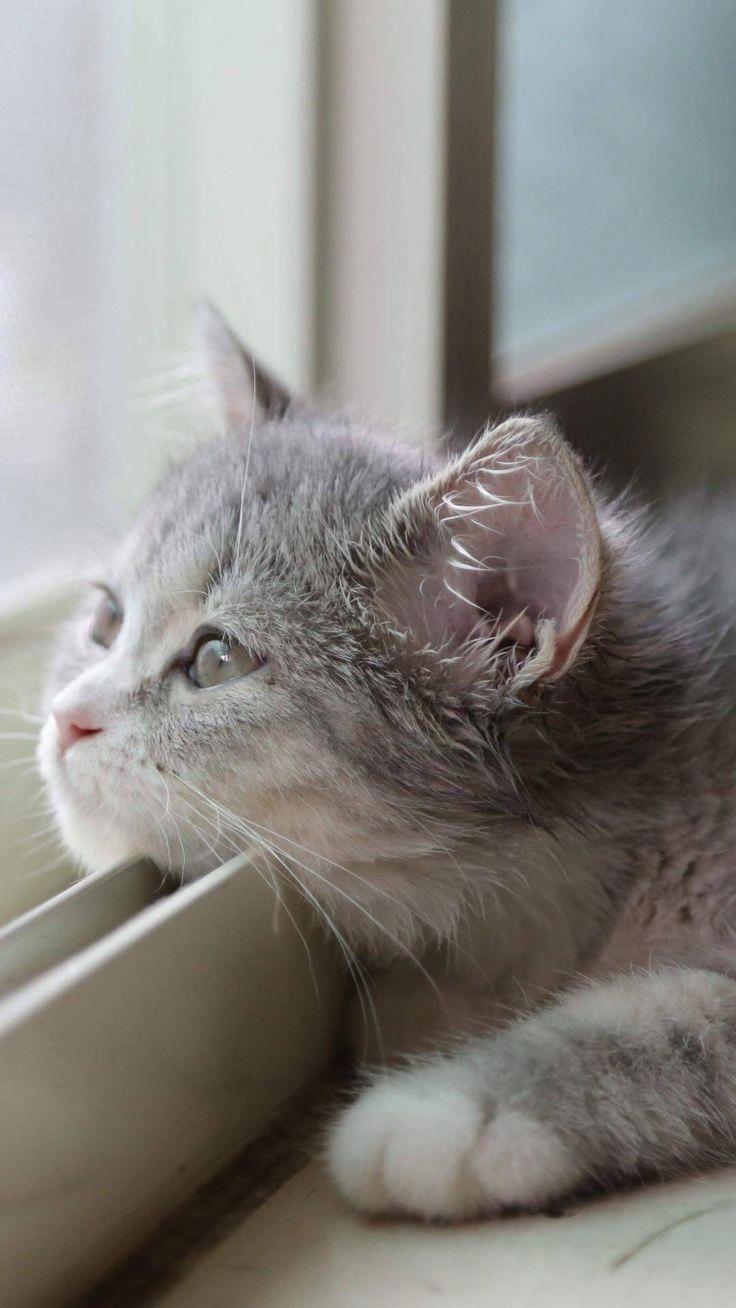 What A Cute Little Daydreamer หมาแมว ล กแมว แมว