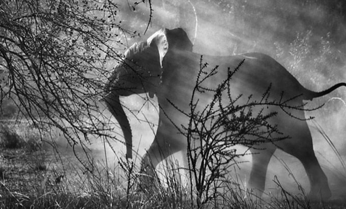 """""""Genesis"""" , finalizado o último grande projeto do fotógrafo Sebastião Salgado"""