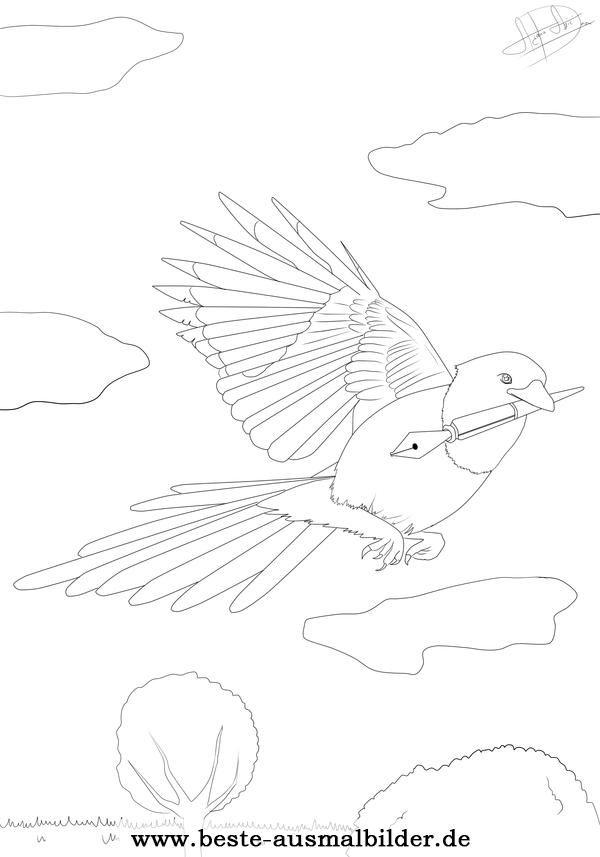 Ausmalbild Elster Vogel Frühling Sommer Herbst Pinterest Bird