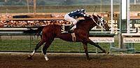 Alysheba streaks to victory in the Strub Stakes ©Santa Anita Photo