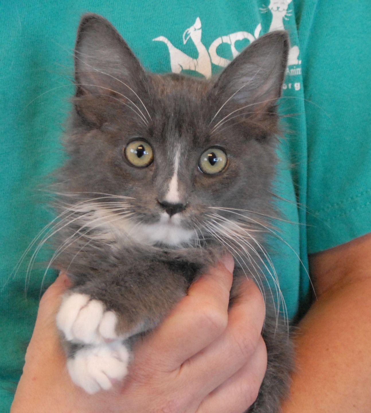 Boo is one of more than 20 rescued kittens available for