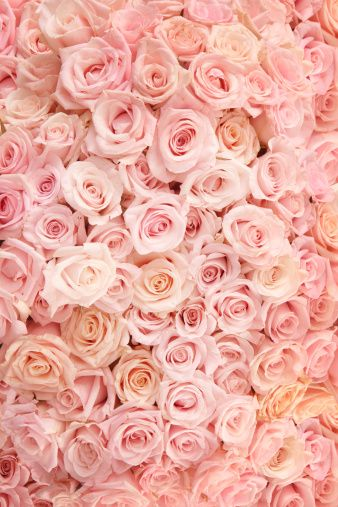 タイトル Pink Roses 15fc8 のスマホ用無料壁紙です 関連