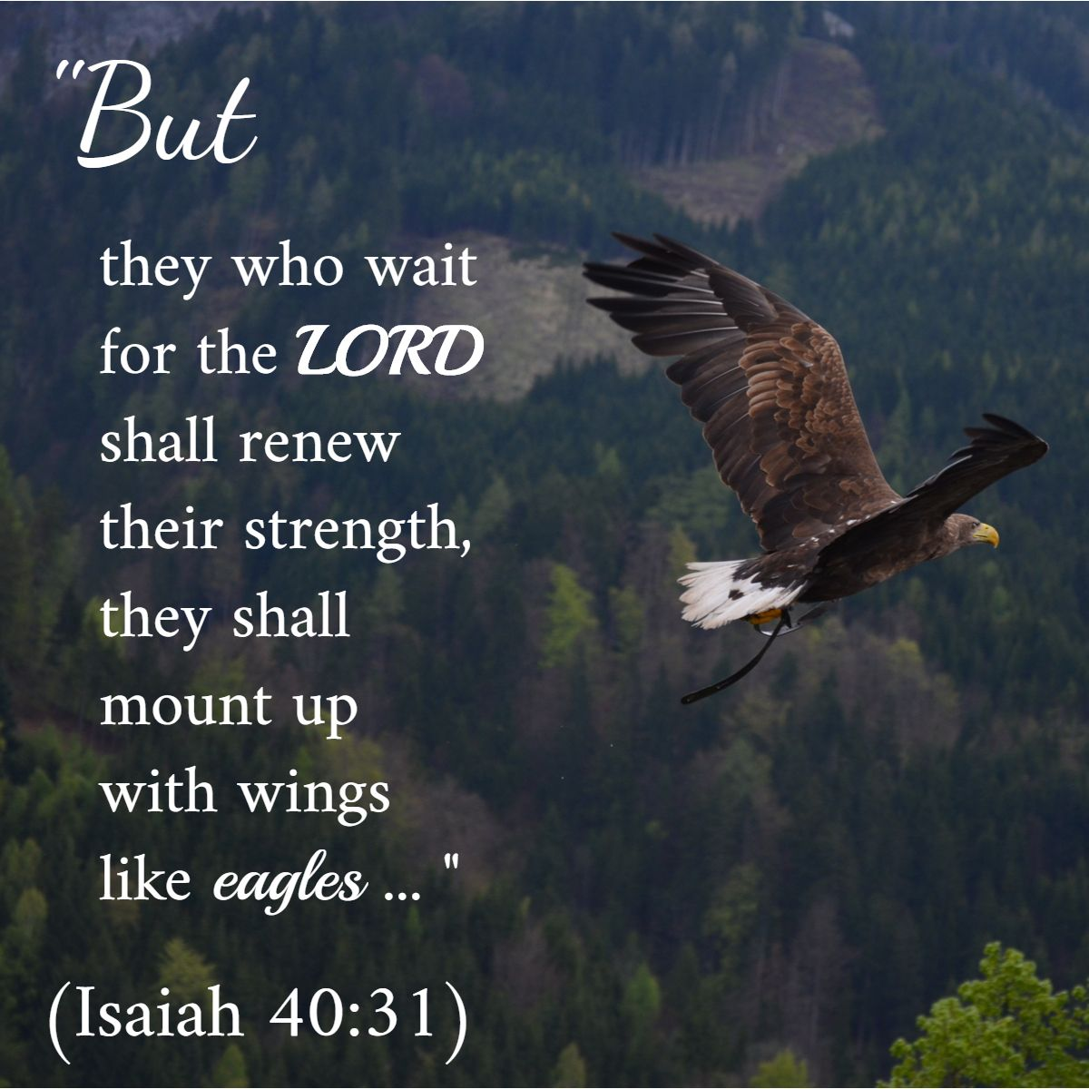 "They shall mount up with wings like eagles"" - Isaiah 40:31 #Amen ..."