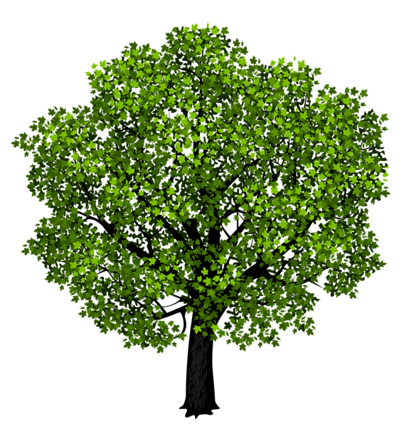 Green Maple Tree PNG Clipart Picture