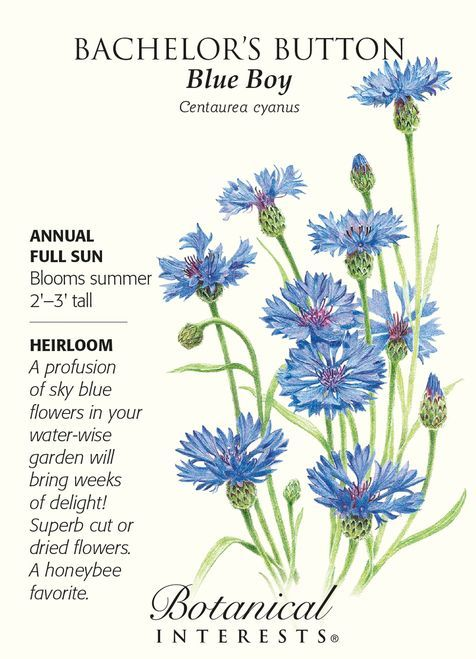 Blue Boy Bachelor S Button Seeds 2 Grams Bachelor Buttons Bachelor Button Flowers Flower Seeds