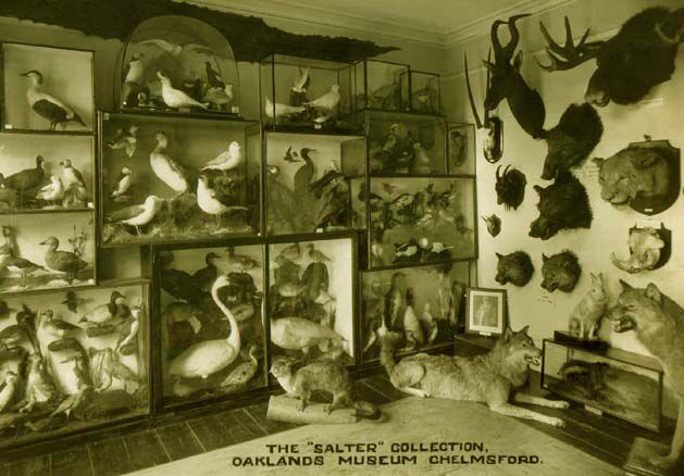 Billede fra http://www.taxidermy4cash.com/saltercollection.jpg.