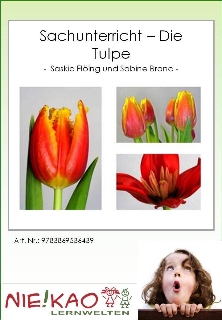 Sachunterricht - Die Tulpe   Unterrichtsmaterial