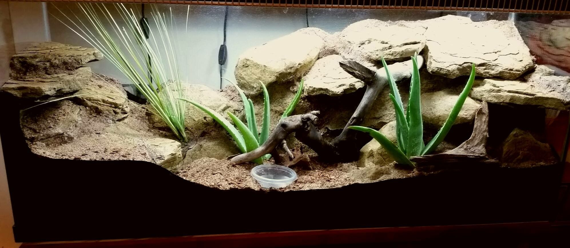 Built By Gary Leverton For A Leopard Gecko Enclosures