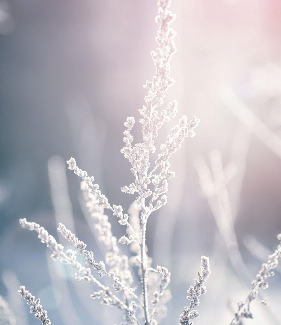 Alpina Feine Farben No. 04 – Zeit der Eisblumen. Mit einem kühlen ...