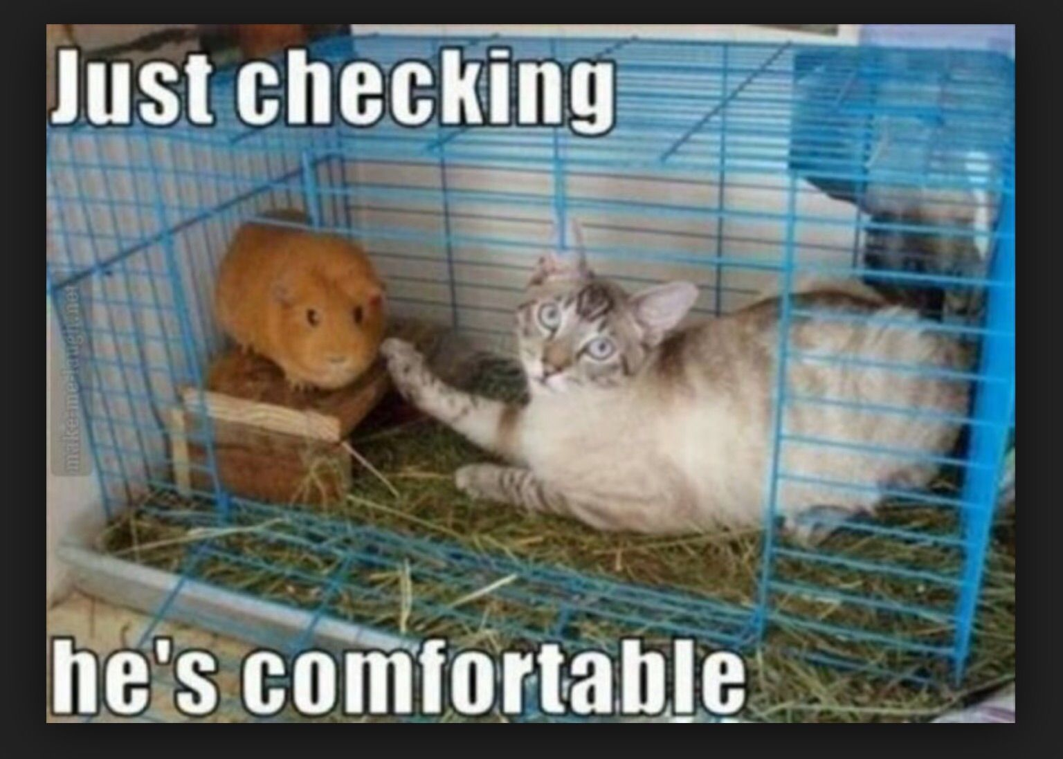 Funny Cat I Was Crazy Once  Refrigerator File Cabinet Magnet