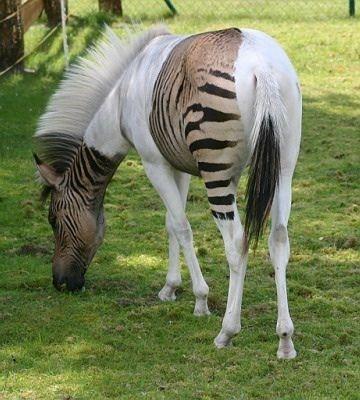 17 seltene Tiere, die einfach wunderschön sind – Tiere Blog