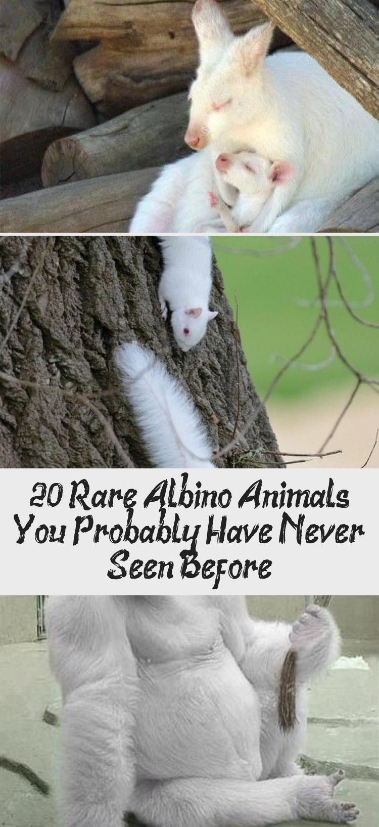 Photo of 20+ Rare Albino Animals You Probably Have Never Seen Before – Animals