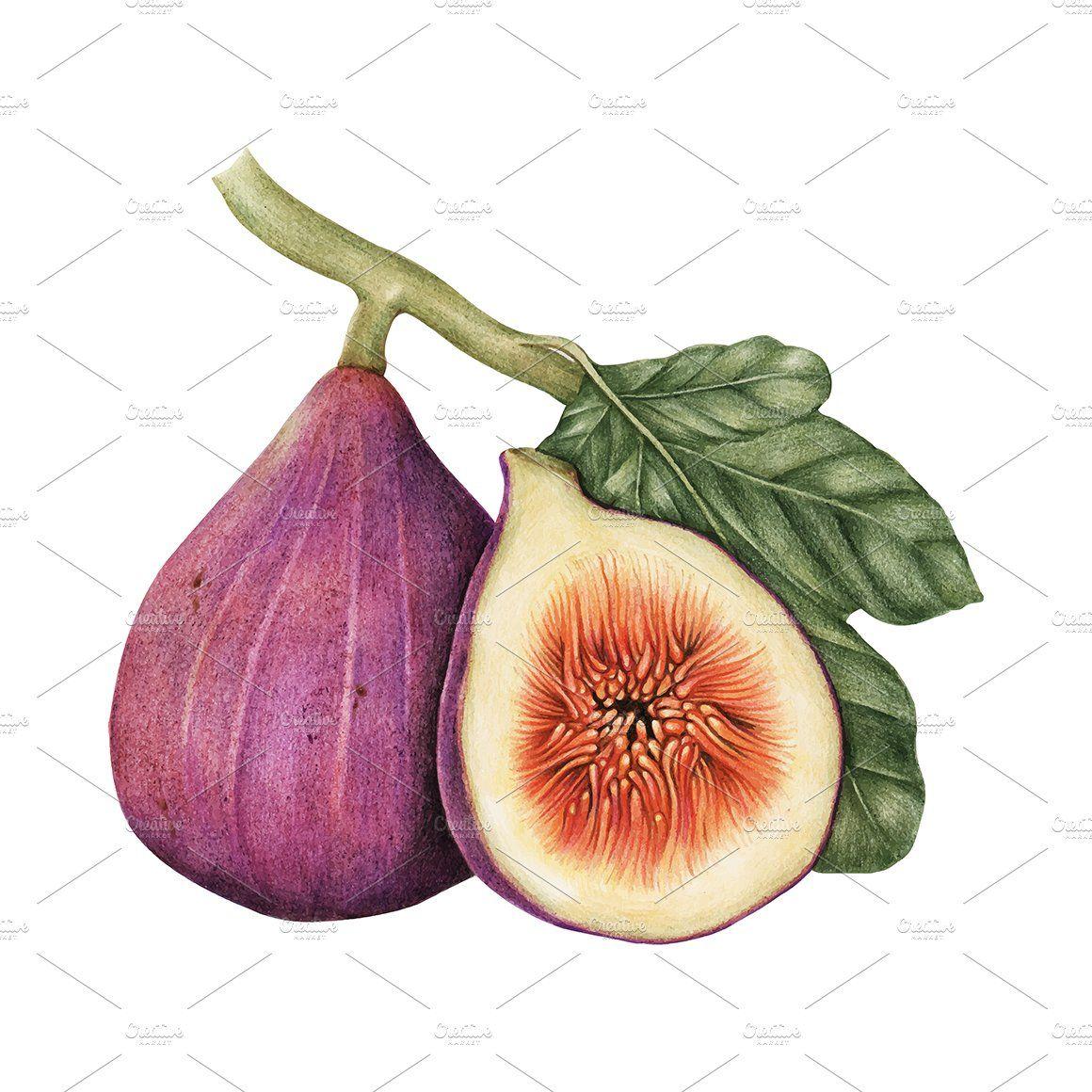 Illustration Drawing Style Of Fig Fig Drawing Fruit Illustration Fig Fruit