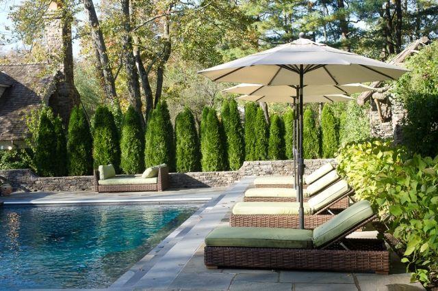 Hecken Sichtschutz Heckenpflanzen Pool Sonnenliegen Arborvitae Thuja