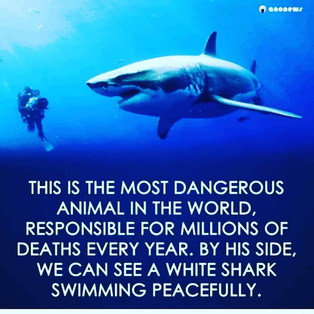 ⚠Humans: the most evil and dangerous animals in the world!⚠ 🌱Go Vegan🌱  🌊🐳🐋🐟🌊 . . . . . #humans… | Dangerous animals, Animals of the world,  Vegan quotes funny