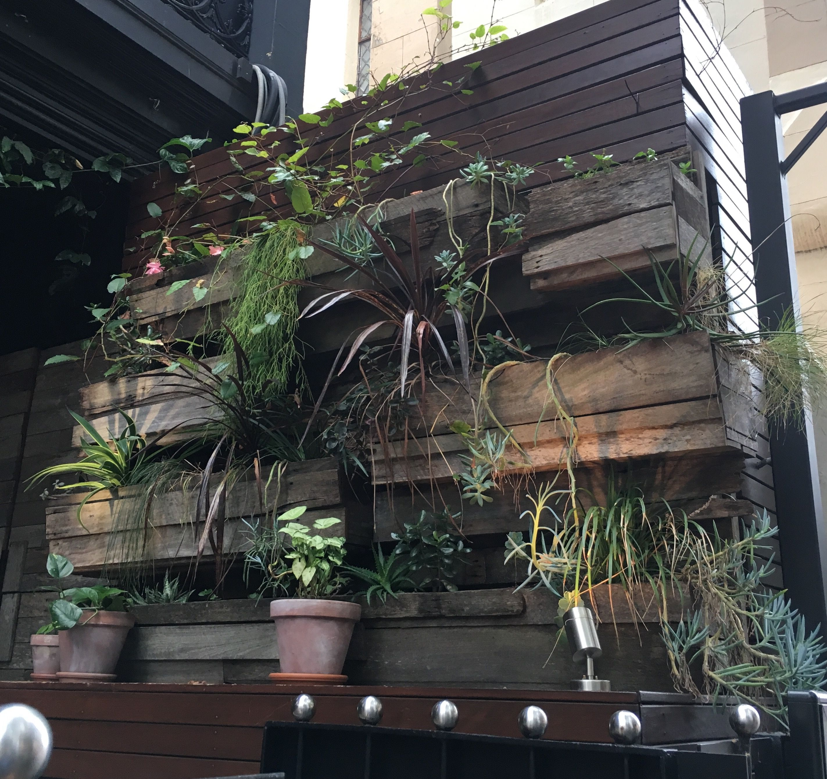 Image Result For Courtyard Trees Australia - Courtyard Ideas -
