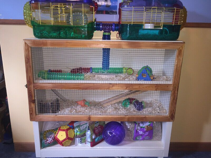 One Of A Kind Amazing Hamster Cage Accessories Kitchener Waterloo Kijiji Hamster Bin Cage Hamster House Hamster Cage