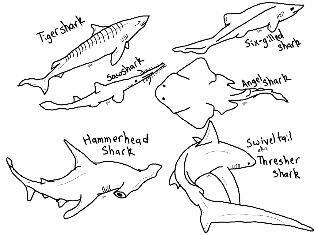 Hammerhead Shark clipart coloring page 1 Shark coloring
