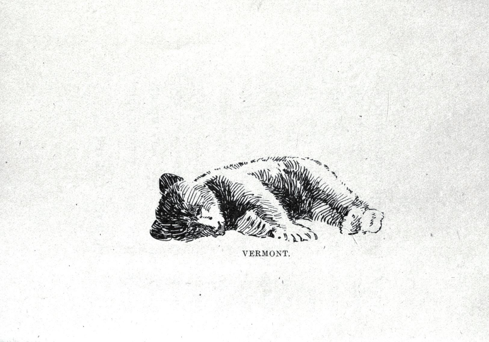 Animal bear baby bear drawing 014 illustration art - Babyzimmer tattoo ...