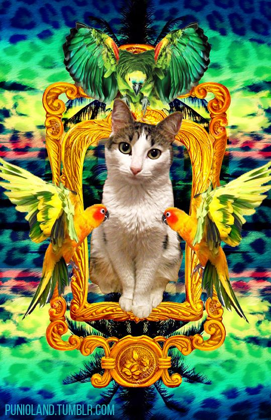 Cat Frame Gold Frame Palms Spring Break Parrot Holidays Summer Panther Cat Art Cat Posters Crazy Cats
