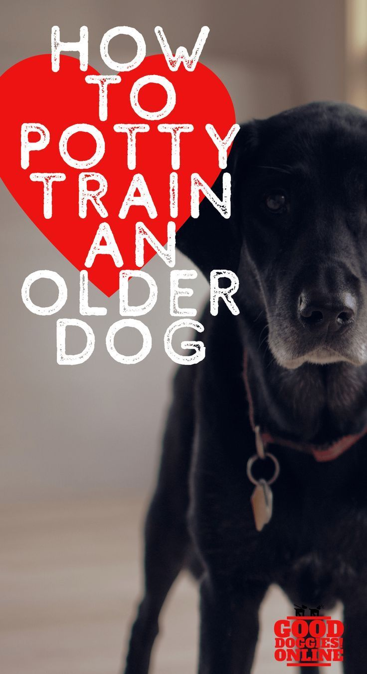 How To Potty Train An Older Dog Dog Training Training Your