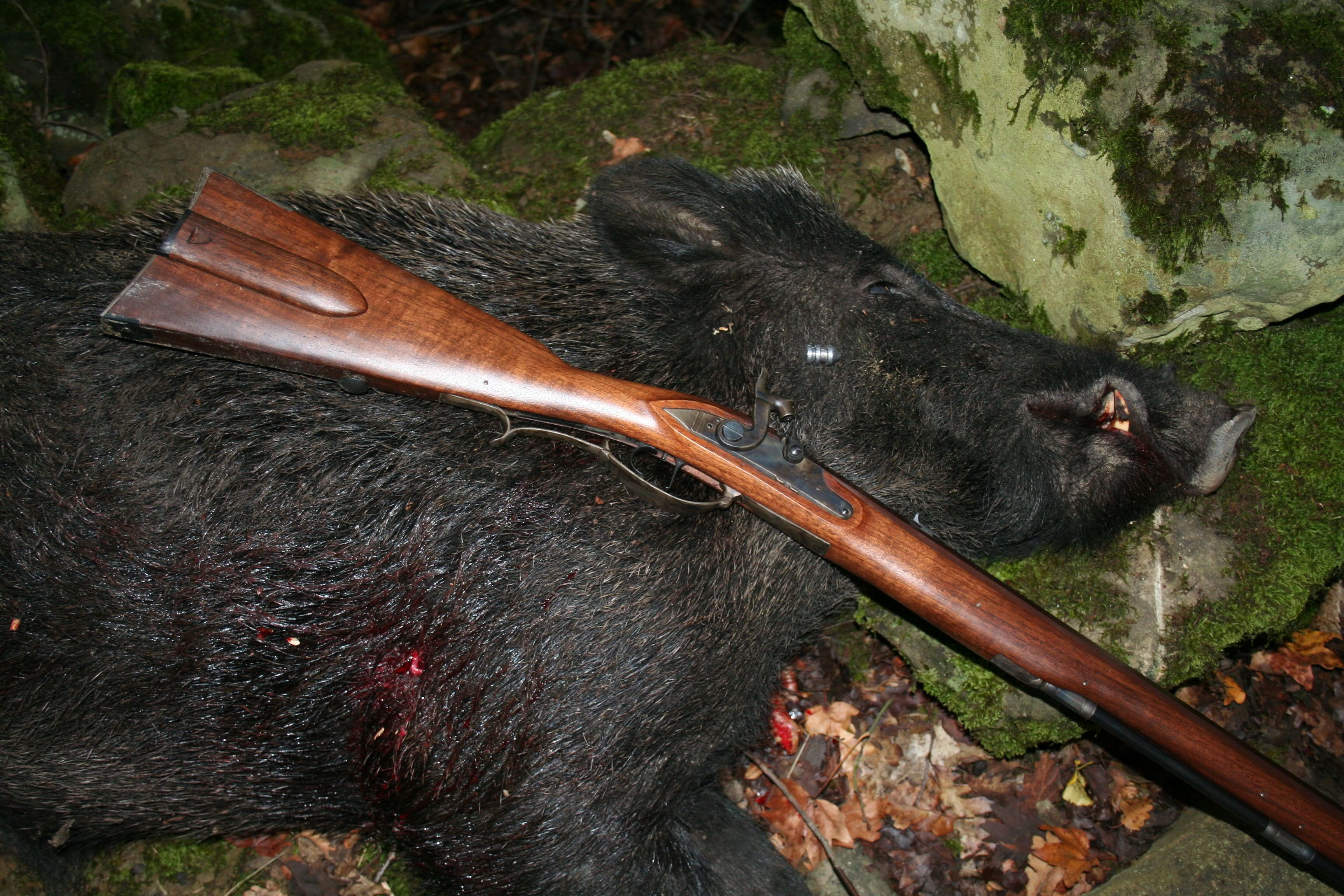 A wild boar taken in italy with a 54 caliber davide