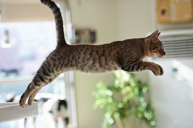 Go for it! via Tumblr #cats