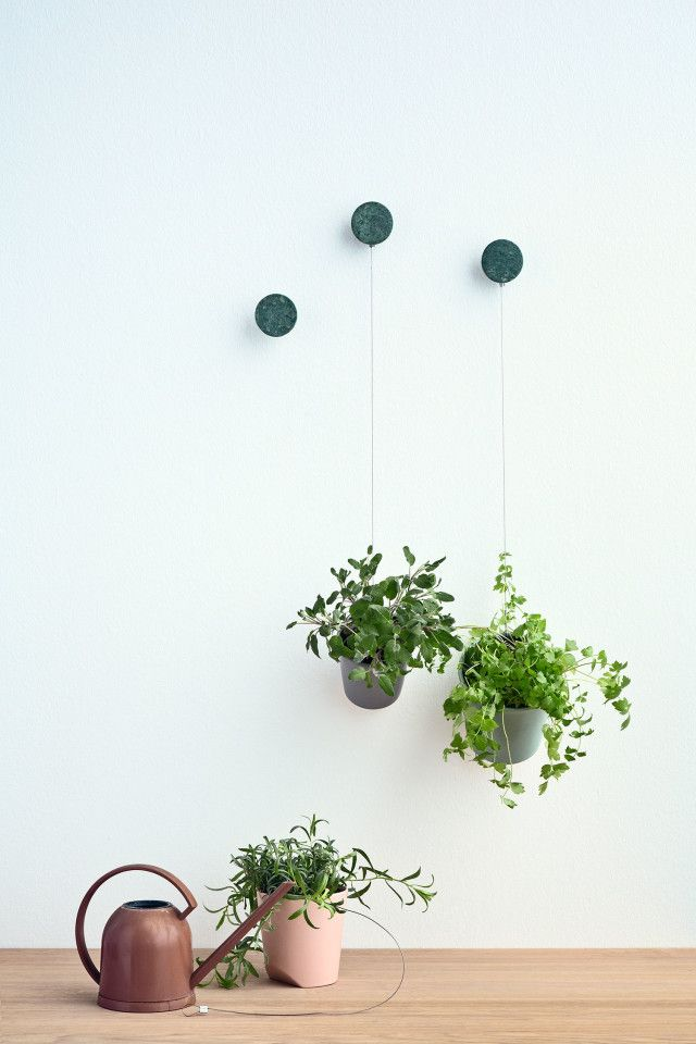 Bolia — Greenfingers Offthechain | shop | Pinterest | Plantas ...