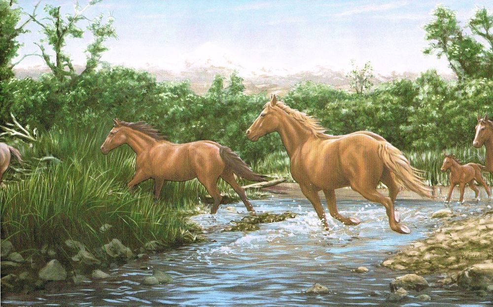 3 Rolls Wild Horses Wallpaper Border Horse Stream Mountains